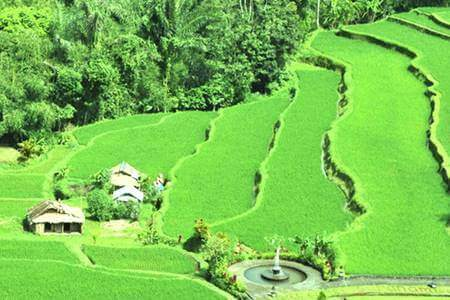 Pacung-rice-terrace